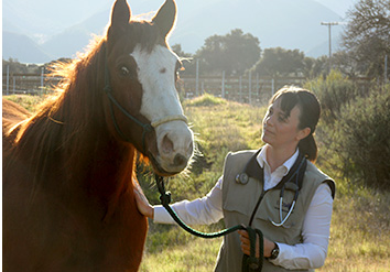 modern equine, horse, equine, veterinarian, veterinary, hospital, ambulatory, mobile, North Salinas, Monterey, Santa Cruz, San Benito, Santa Clara, california, animal hospital, animal clinic, lameness evaluation, pre-purchase examination, surgery, internal medicine, ophthalmology, reproduction, Modern Equine is a full service ambulatory veterinary practice serving North Salinas, Monterey, Santa Cruz, San Benito, and south Santa Clara counties, providing comprehensive care for horses.